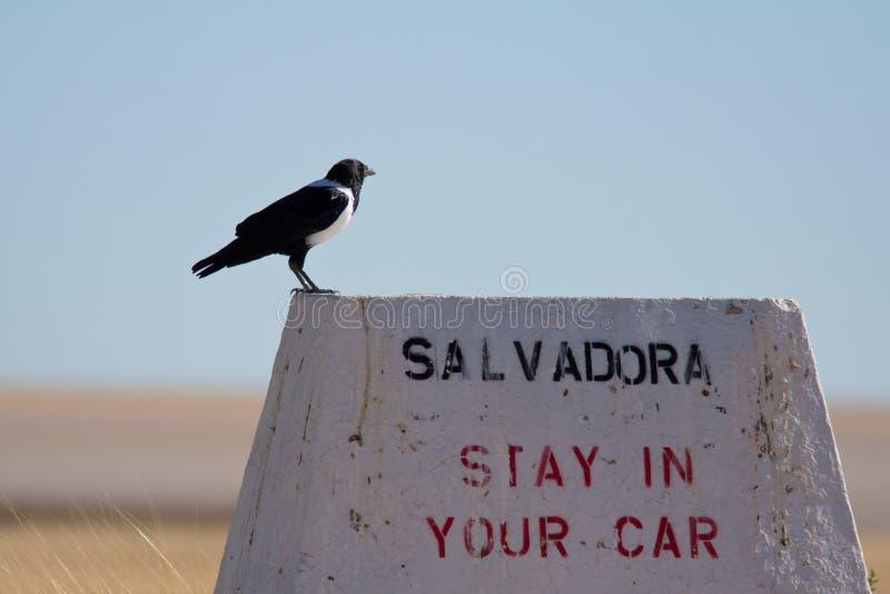 Download Danger area stock image. Image of danger, namibia, park - 25091937