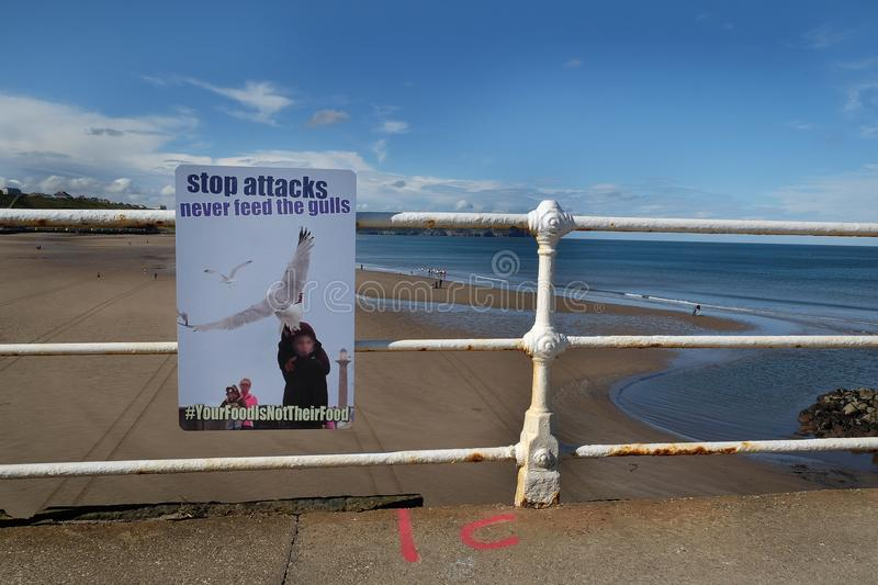 Danger from attack by seagulls sign. royalty free stock image