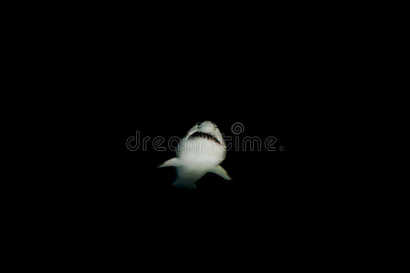 Danger de requin photo libre de droits