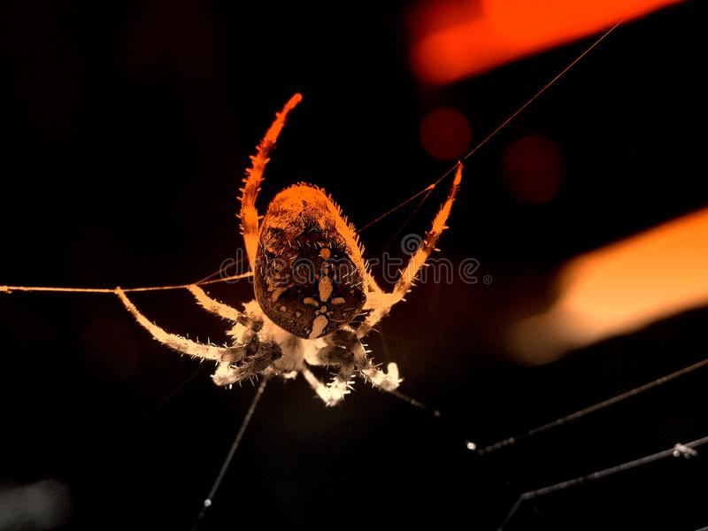 Danger spider background
