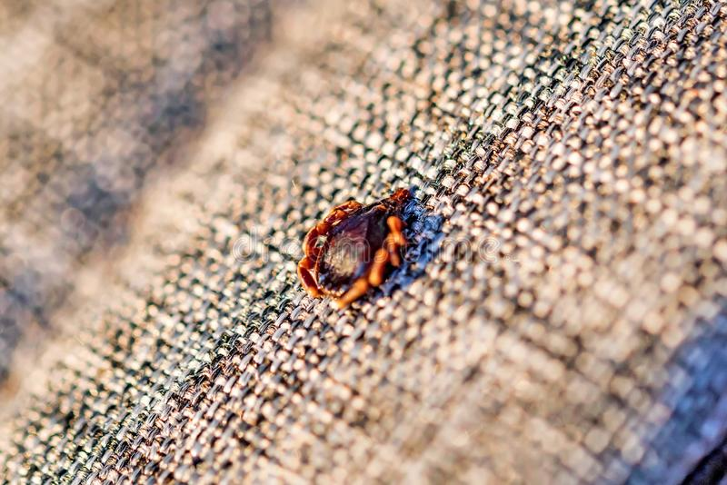 Dangerous parasite mite sits on cloth texture stock image