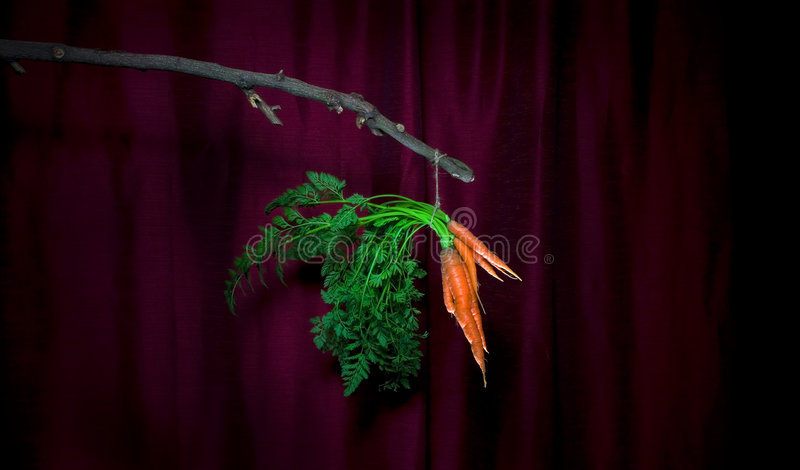 Dangling Carrots royalty free stock images