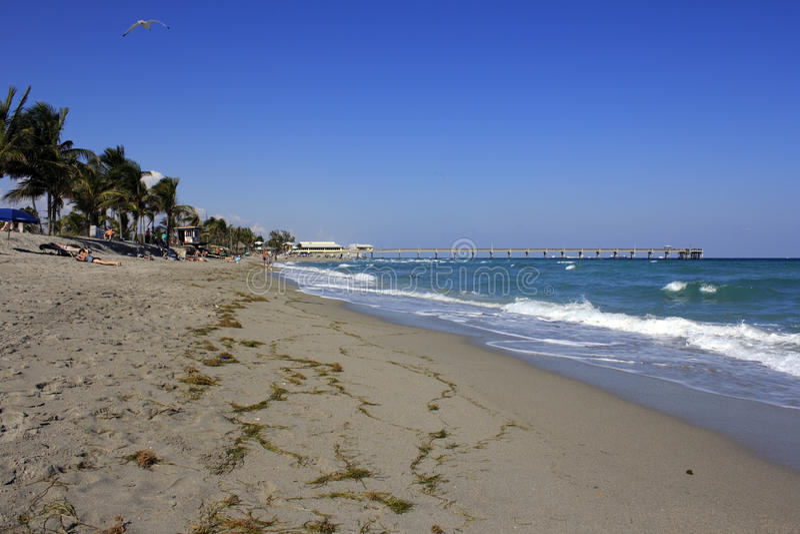 Dania放松海滩的人 免版税库存照片