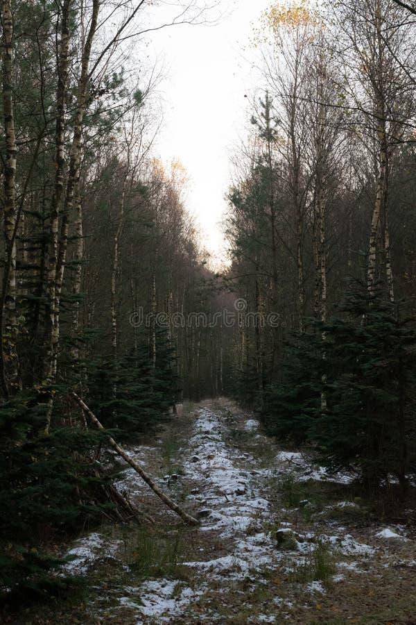 Danish Forest. Viborg royalty free stock image