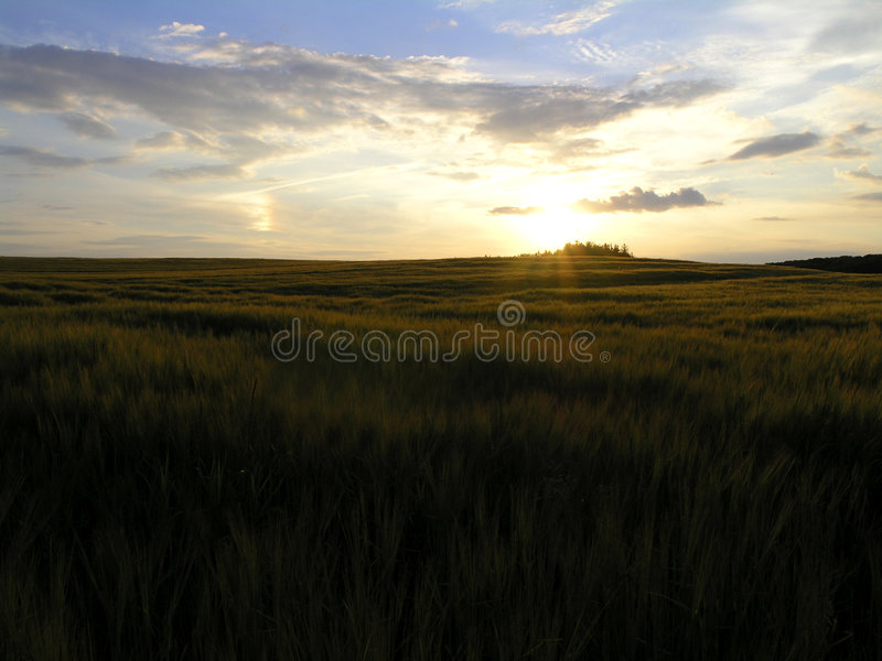 Danish sunset landscape stock photography