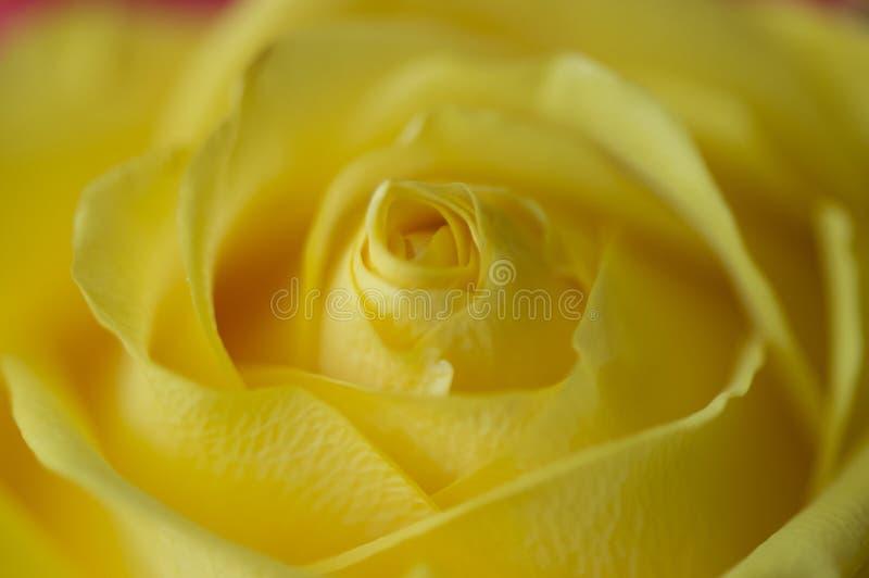 Dankbarkeit im Gelb stockfoto