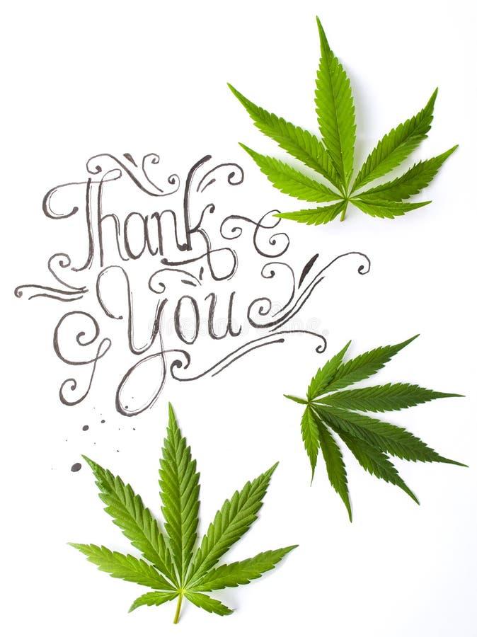 Danke, mit Marihuanablättern zu kardieren stockfoto
