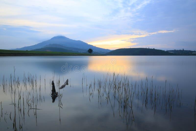 Dankia lake. Alone tree in Dankia lake, Dalat, Vietnam stock photo