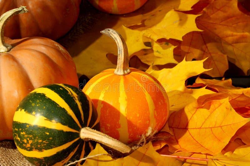 Danksagung kleiner stripeds Kürbis-Herbstlaubhintergrund stockbild