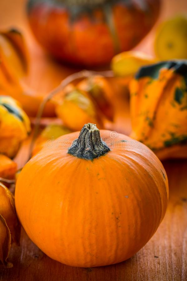 Danksagungs- und Halloween-Kürbise stockfoto