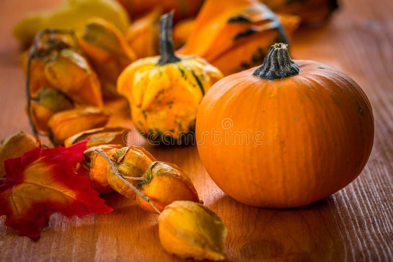 Danksagungs- und Halloween-Kürbise stockfotos