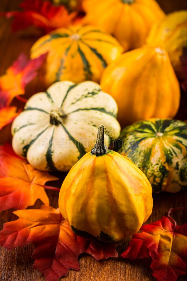 Danksagungs- und Halloween-Stillleben mit Kürbisen lizenzfreie stockbilder