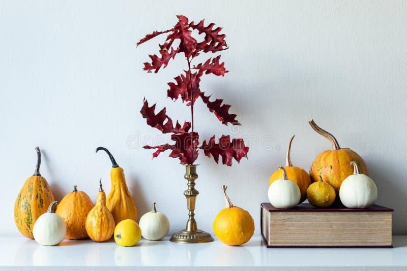 Danksagungsdekoration Minimaler Herbst spornte Raumdekoration an Auswahl von verschiedenen Kürbisen auf weißem Regal lizenzfreie stockfotografie
