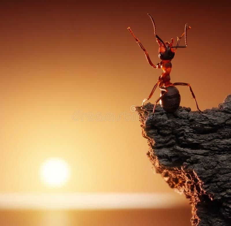 Dankzegging, mierenverhalen stock fotografie