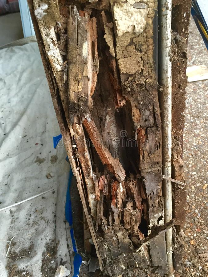 Danno della termite immagini stock libere da diritti