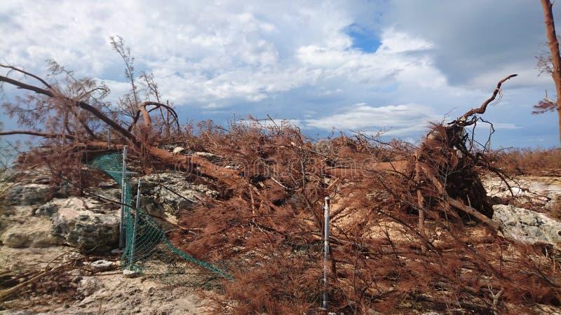 Danno di uragano immagine stock libera da diritti