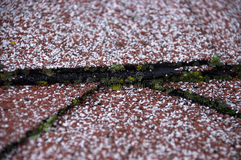 Danno muschio/della muffa sulle assicelle del tetto fotografie stock libere da diritti