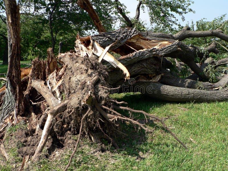 Dano da tempestade - árvore abaixo de 3 fotos de stock