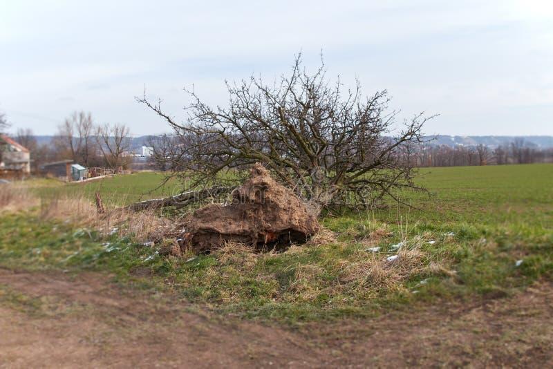 Dano da tempestade, árvore caída foto de stock