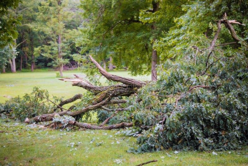Dano da tempestade quebrado após a árvore caída tempestade do furacão uma tempestade fotos de stock royalty free