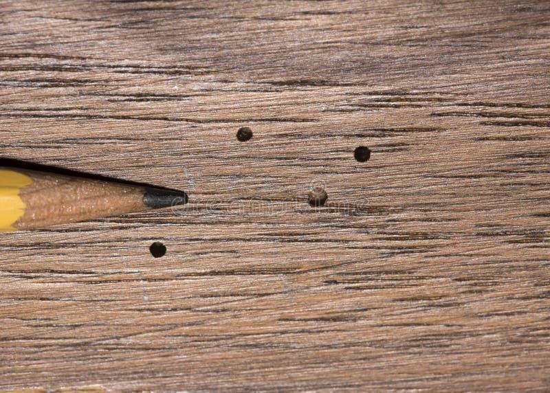 Dano do besouro da perfuração de madeira imagem de stock