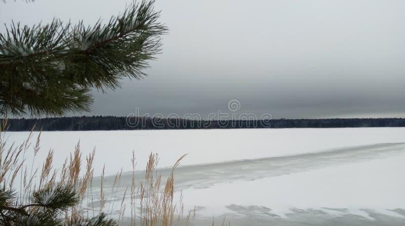Dans l'arbre de branches de forêt d'hiver dans la neige Horizon de neige Papier peint de fond photos libres de droits