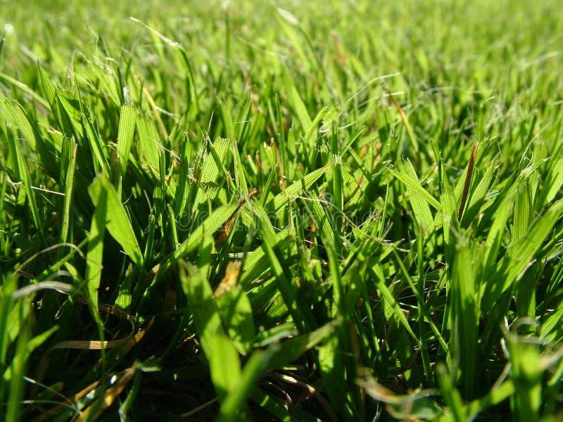 Dans l'herbe photo libre de droits