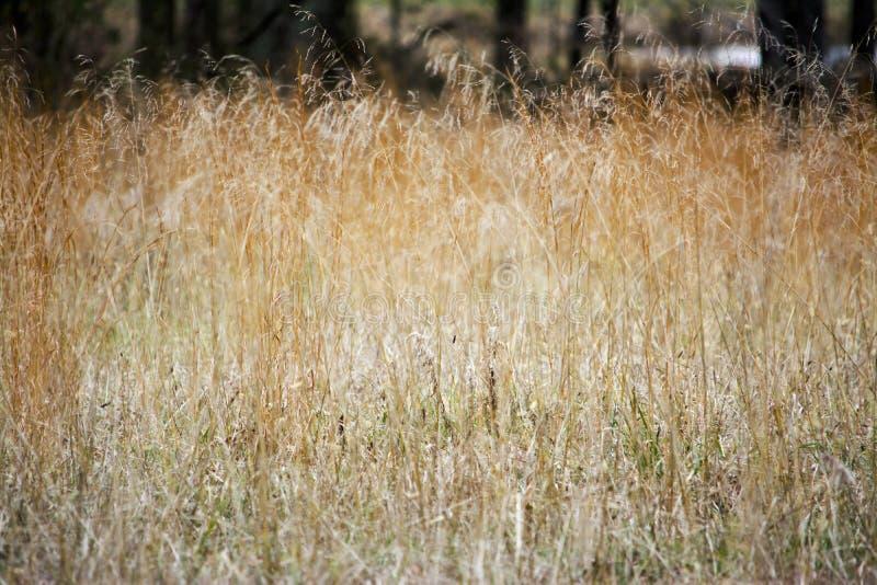 Dans l'herbe grande photos stock