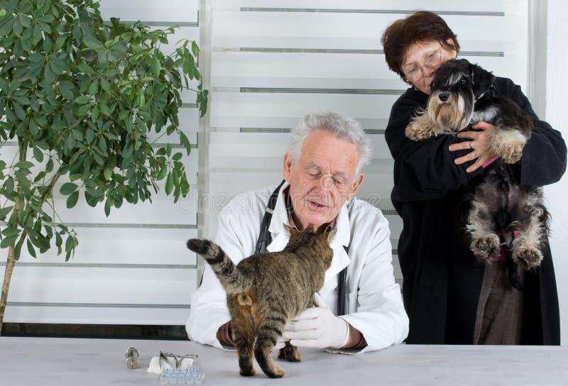 Dans l'infirmerie vétérinaire photographie stock libre de droits