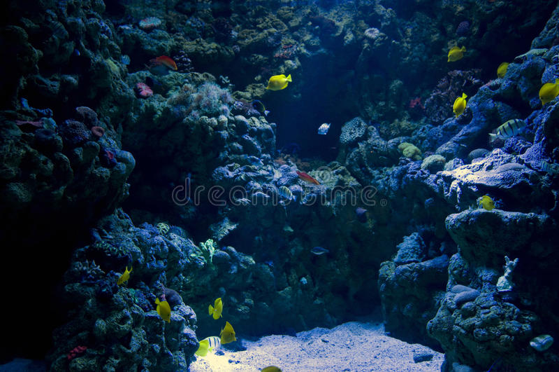 Dans l'océan photos stock