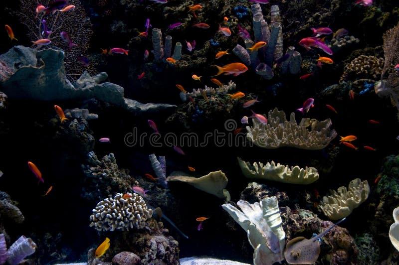 Dans l'océan image libre de droits