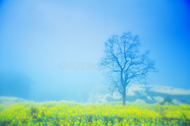Dans la brume d'un arbre photos stock