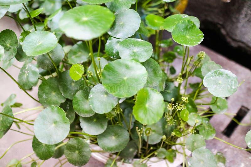 Dans la cuvette de lotus Suzhou, la Chine photographie stock libre de droits