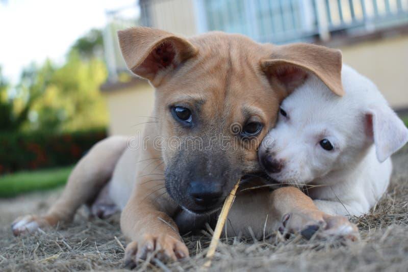 Dans la ferme ayez un chien que le nom est chanceux image stock