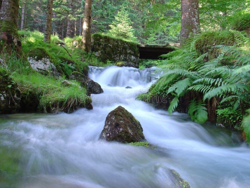 Dans la forêt image stock