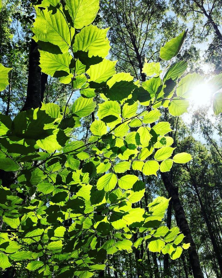 Dans la forêt photos stock