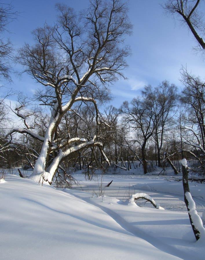 Dans la forêt de l'hiver photo stock