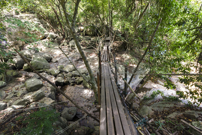 Dans la jungle de Koh Samui, la Thaïlande image libre de droits