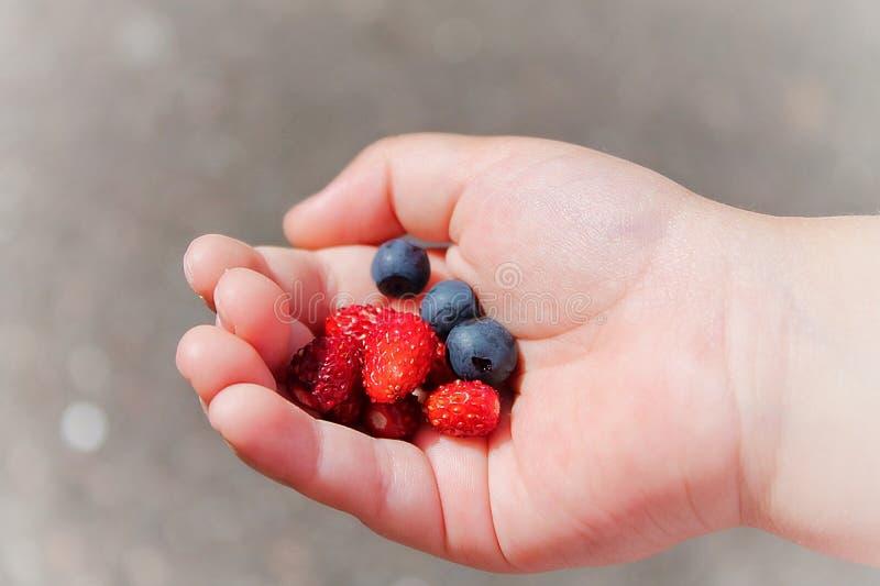 Dans la main des fraises et des myrtilles de baies d'un enfant photos libres de droits