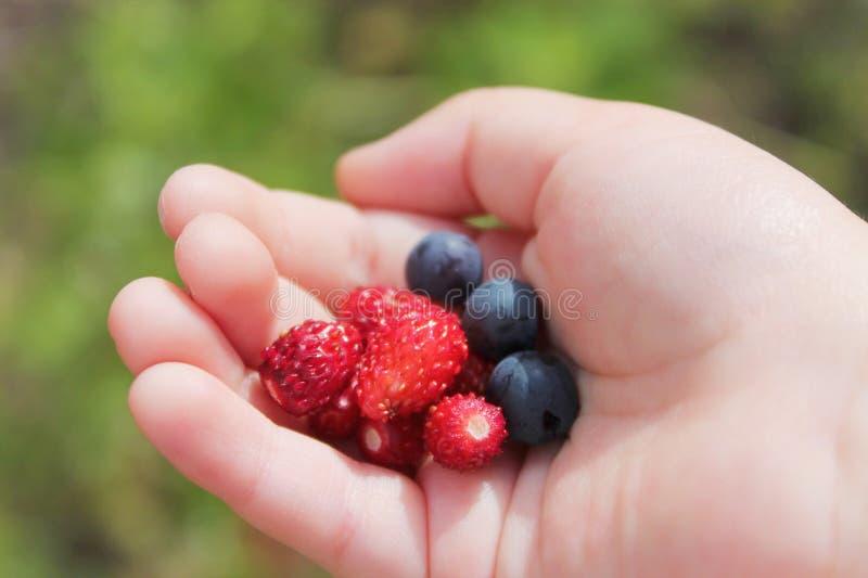 Dans la main des fraises et des myrtilles de baies d'un enfant photo libre de droits