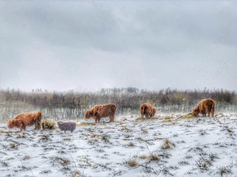 Dans la poignée de l'hiver photos libres de droits