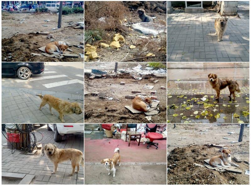 Dans la ville le chien égaré photographie stock libre de droits