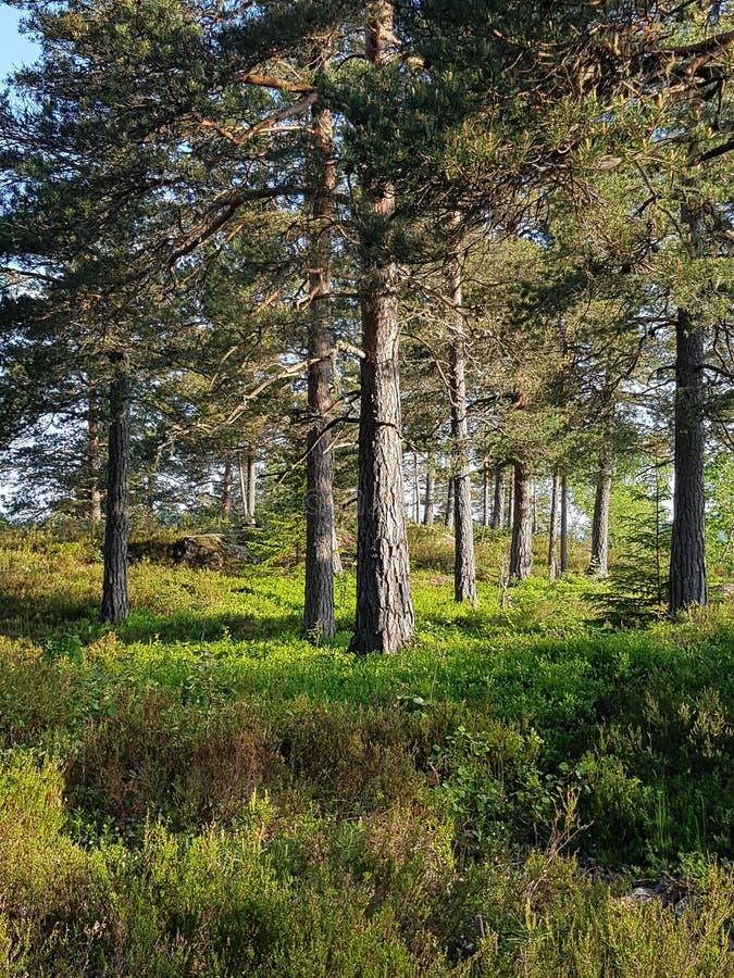 Dans le bois images libres de droits