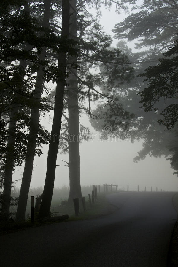 Dans le brouillard photos stock