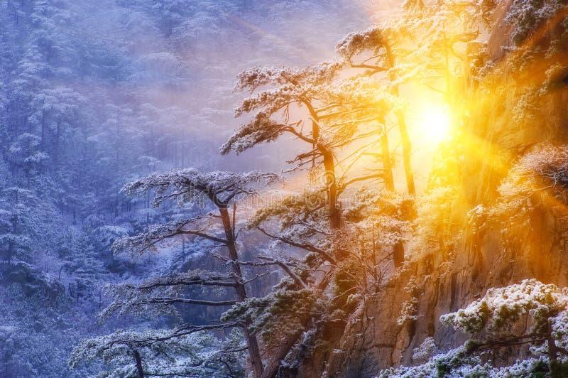 Dans le conte de fées d'hiver photographie stock libre de droits