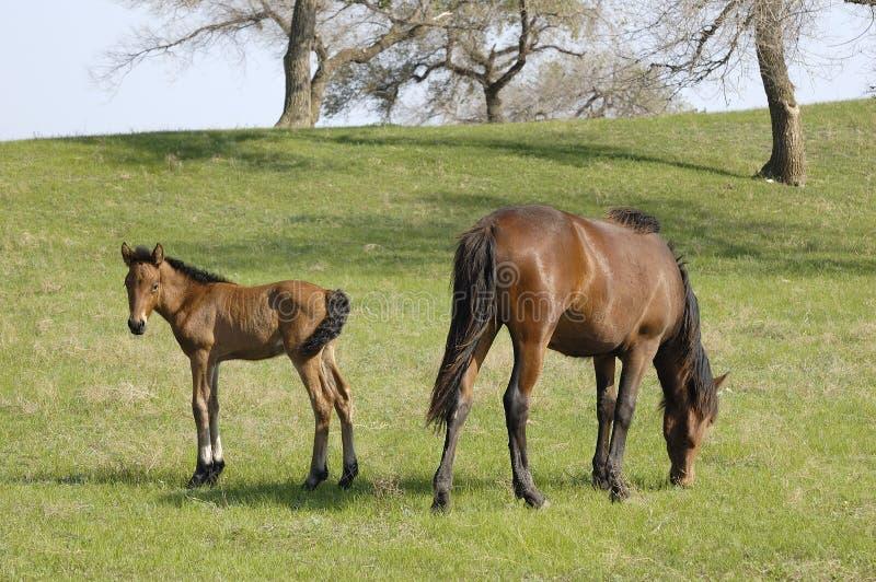 Dans le ranch de cheval photo libre de droits