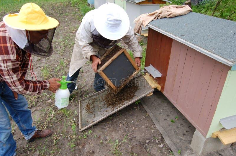 Dans le rucher images stock