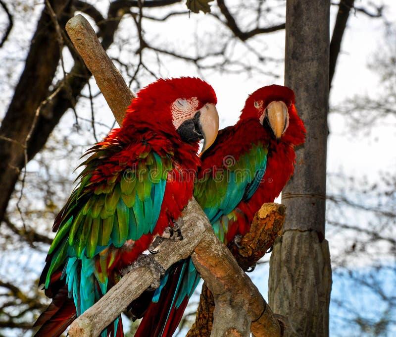 Dans le sauvage avec les oiseaux exotiques photo stock