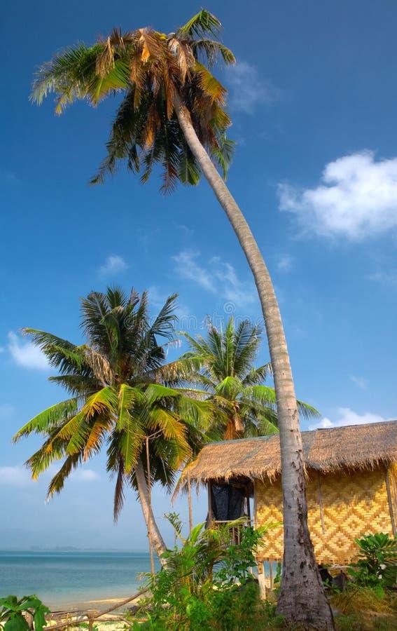 Dans le tropique photos libres de droits