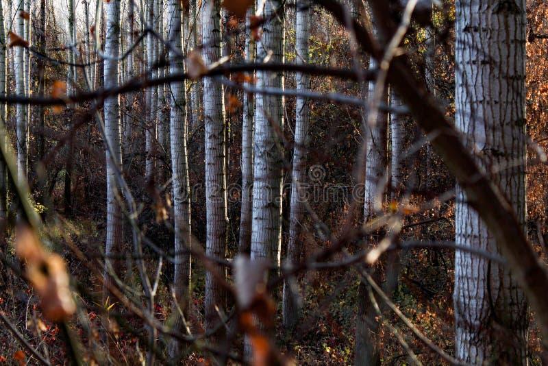 Dans les bois images stock